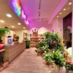 Fiori e colori,Genova – Fotografo Certificato Google Street View